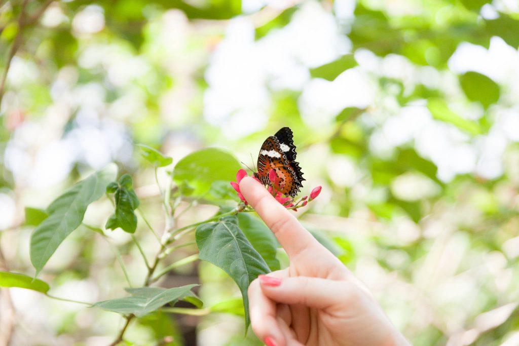 Bali Reiseberbicht - Schmetterlings Haus