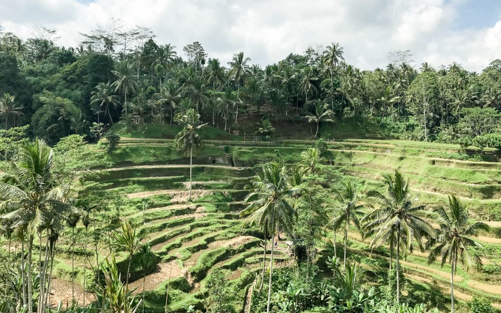 Reisebericht Bali - Reisterrassen