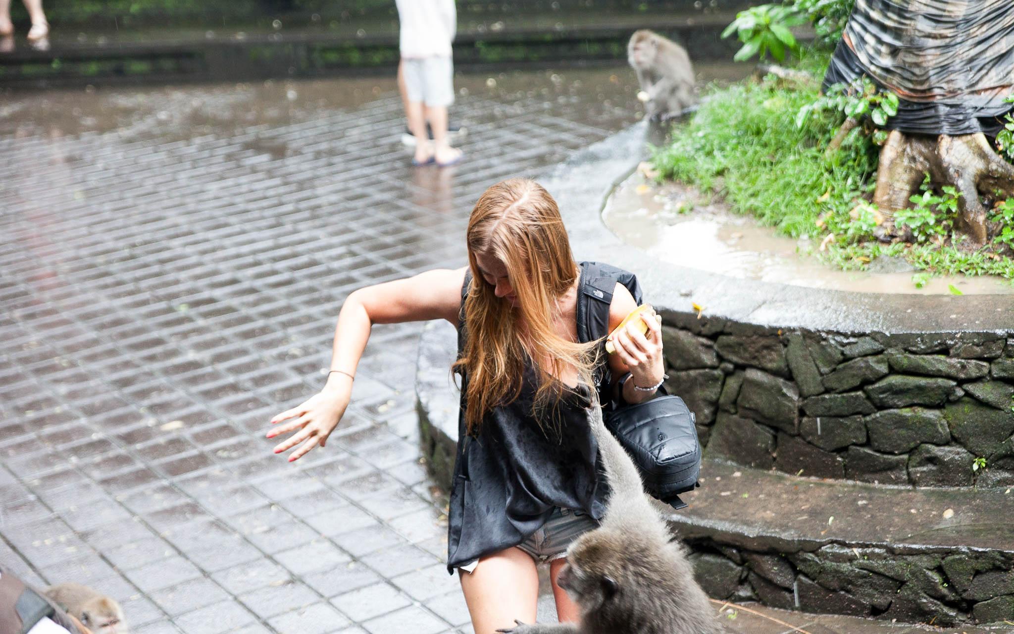 Monkey Park Ubud
