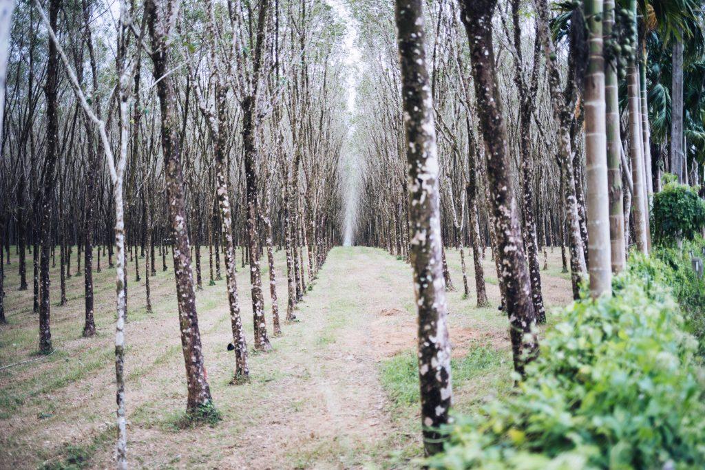 Atemberaubende Natur in Khao Lak