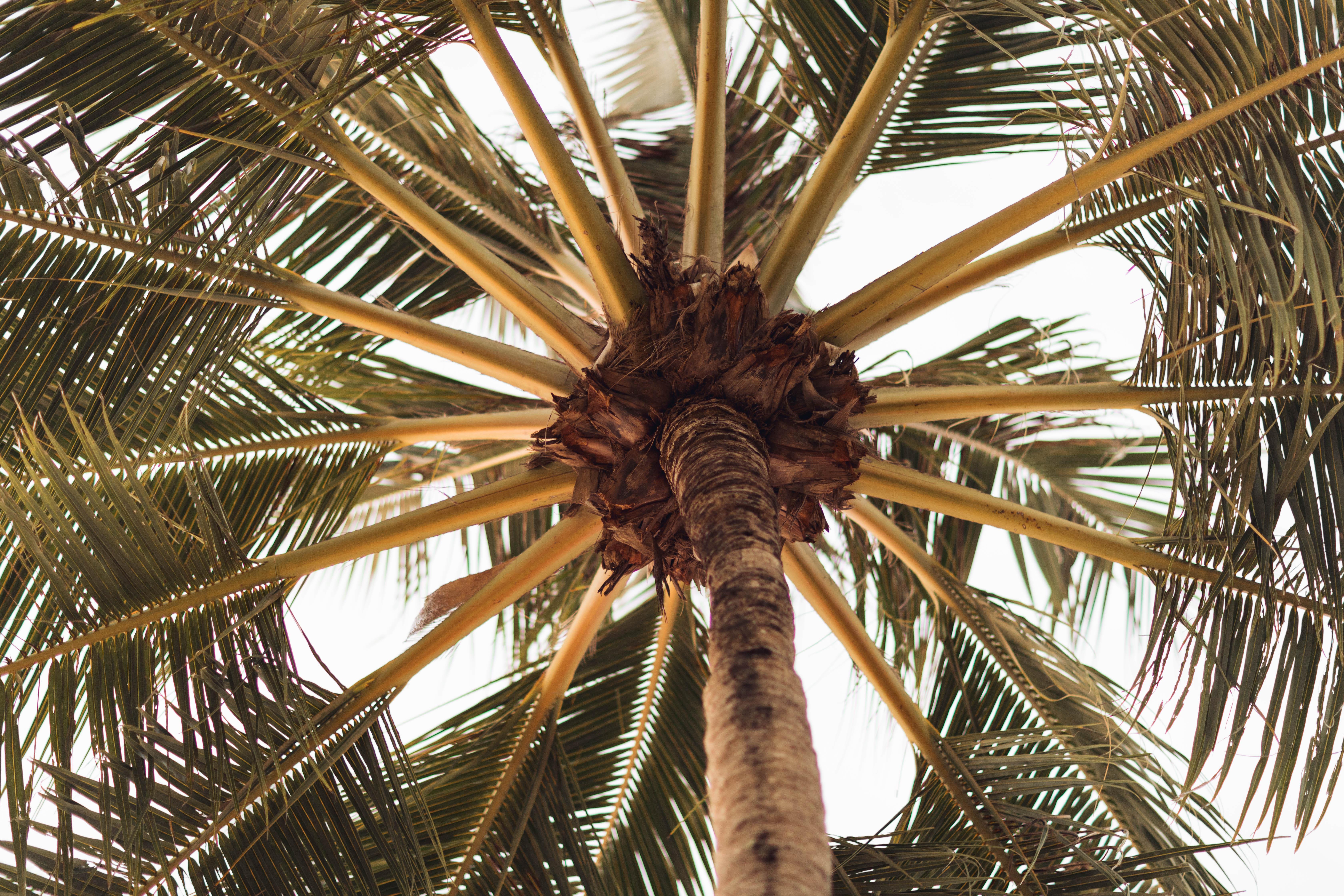 Palmen in Khao Lak